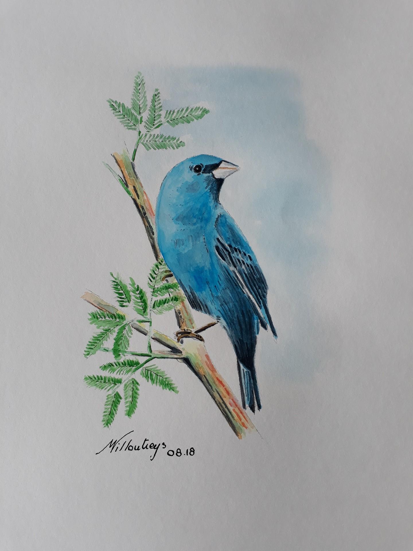 Moineau bleu