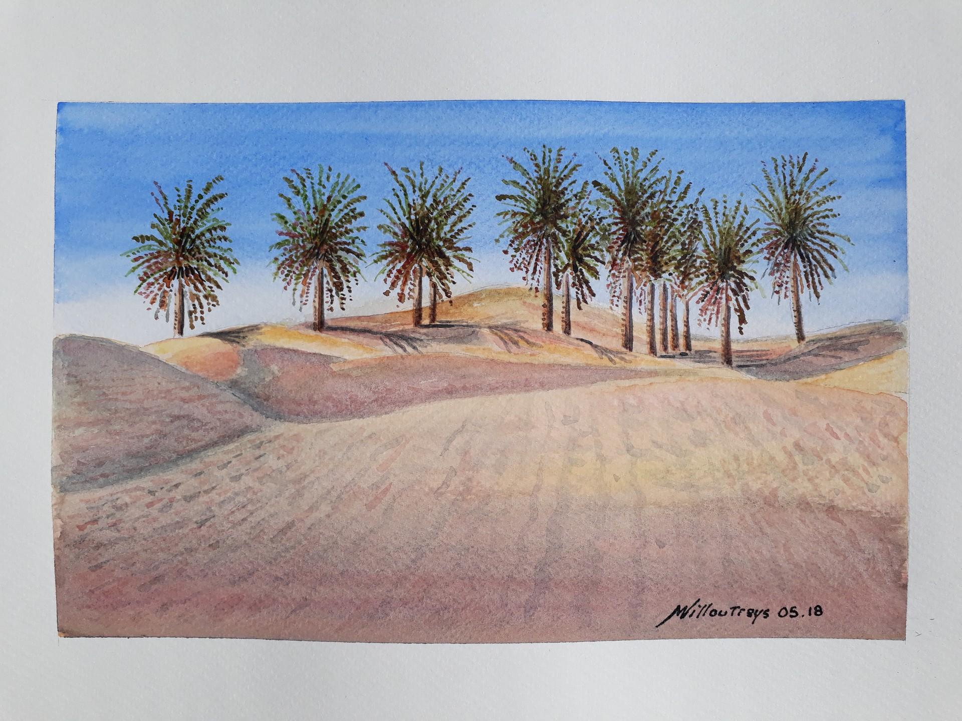 Sahara palmiers